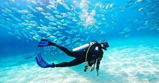 Diving Sessions In The Northern Coast Of Mauritius - Pereybere