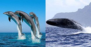 Swim With Dolphins & Whale Watching