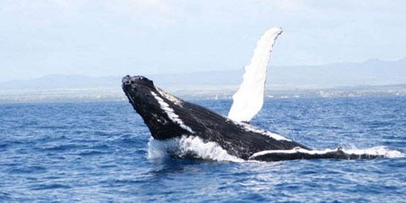 Mauritius whales watching